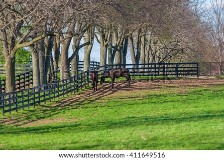Horses at horse farm. Country spring landscape. - stock photo