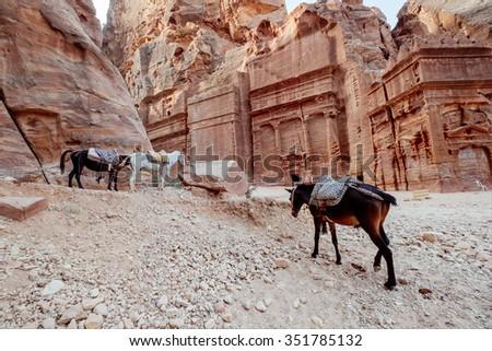 Horses at the ancient site of Petra, Jordan - stock photo