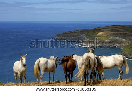horses at the coast of azores in sao miguel island, Portugal - stock photo