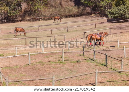 Horses Closeup Detail Polo horses ponies animals detail saddled up for game in field paddock. - stock photo