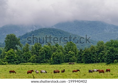 Horses eating grass on mountain meadow - stock photo