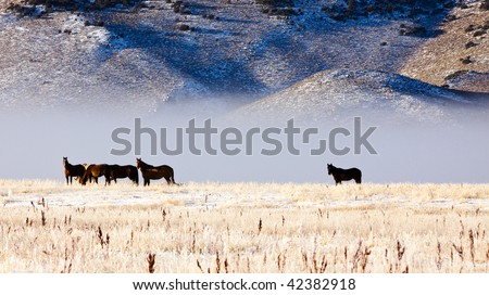Horses, Fog, and Mountains at Dawn 2 - stock photo