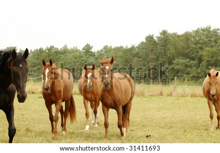 Horses go to a pasture.