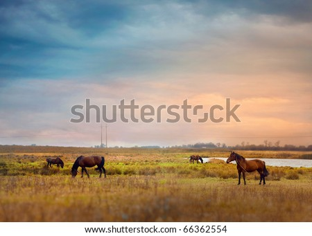 Horses graze in a field - stock photo