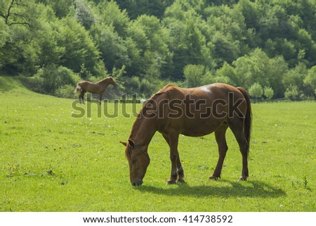 Horses graze in the meadow - stock photo