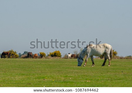 Horses grazing at Wilverley in the New Forest National Park