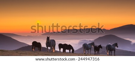 Horses grazing in fog at sunrise  - stock photo