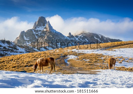 Horses grazing in the mountains, in Romania - stock photo