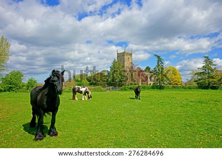 Horses grazing peacefully in a meadow in spring time, St Mary's church can be seen in the background, Frampton on Severn, Gloucestershire, United Kingdom - stock photo