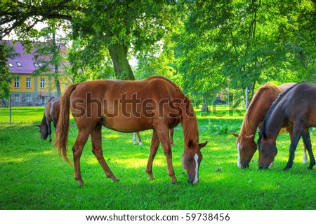 Horses. Herd of horses on green pasture. - stock photo