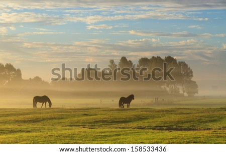 Horses in a foggy meadow in autumn. - stock photo