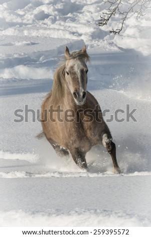 Horses In A Winter Wonderland - stock photo
