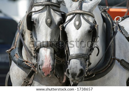 Horses in Andalusia, Spain