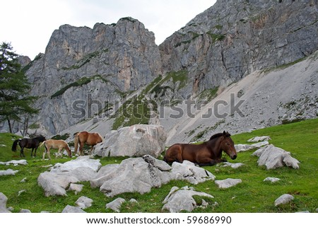 horses in Austria mountain