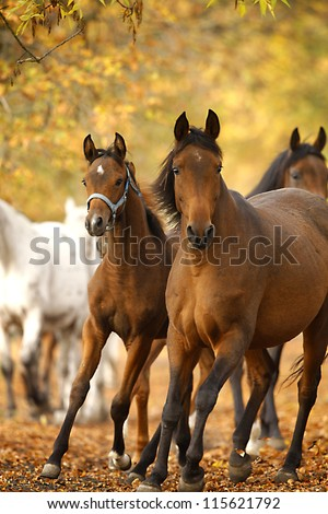horses in autumn - stock photo
