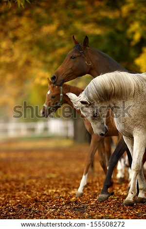 horses in autumn - stock photo