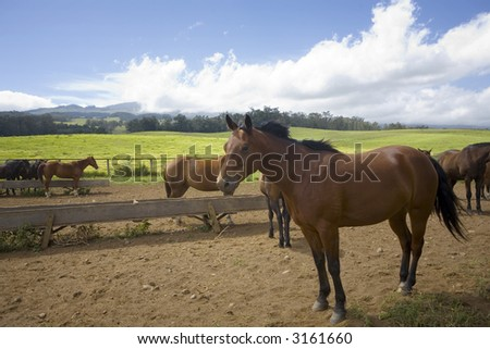 Horses in coral with scenic background - stock photo