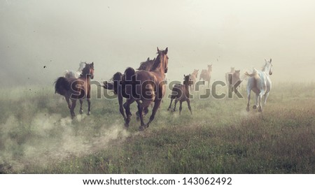 Horses in dust - stock photo