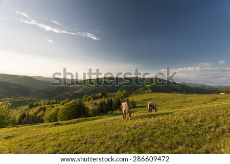 horses in meadow, carpatians mountains