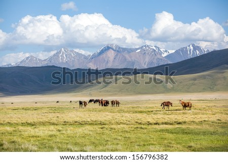 Horses in mountains. Shallow focus on right horses - stock photo
