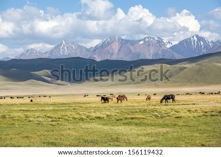 Horses in mountains. Sheeps and yaks on background - stock photo