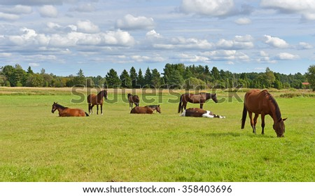Horses in pasture. Rural landscape - stock photo