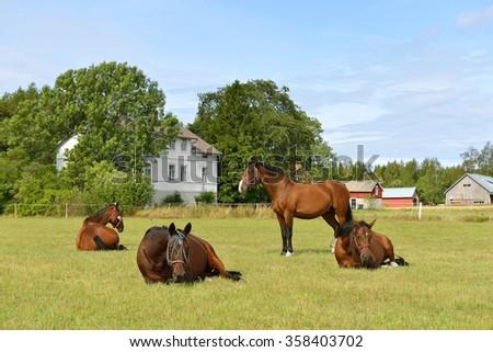 Horses in pasture. Rural landscape - stock photo