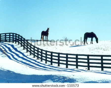 Horses in snow - stock photo