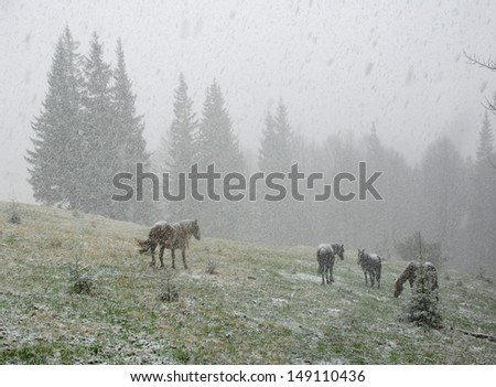 Horses in snowy winter forest - stock photo