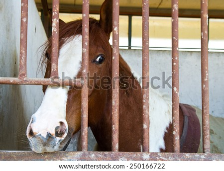horses in stable - stock photo