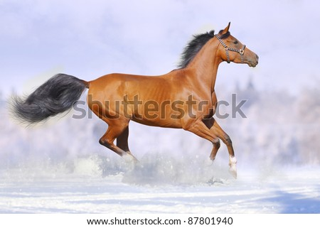 horses in summer - stock photo