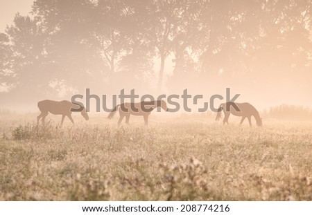 horses in sunshine and fog on pasture
