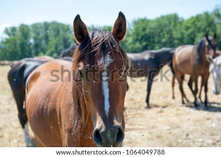 Horses in the field in Herreninsel