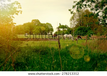 Horses in the field on a sunny day - stock photo