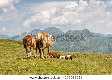 Horses in the French Pyrenees - stock photo