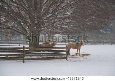 Horses in the Snow - stock photo
