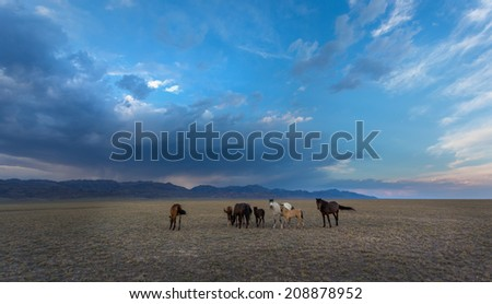 horses in the steppe
