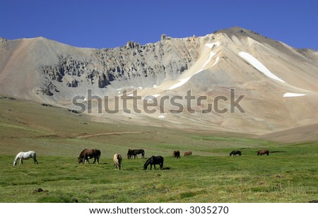 Horses in the valley - Mendoza - Argentina