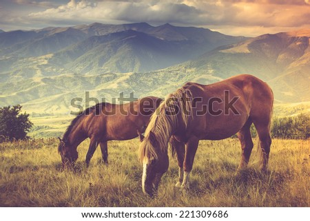 Horses is grazing against mountains.  Autumn landscape. Filtered image:cross processed vintage effect.  - stock photo