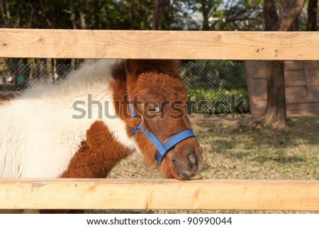 horses miniature - stock photo
