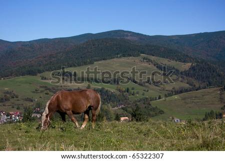 Horses near mountains - stock photo