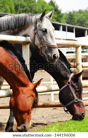 Horses near the stable - stock photo