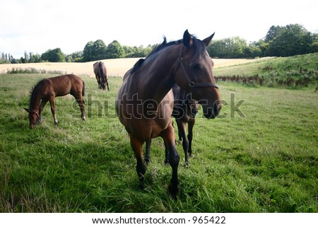 horses on a field in the summer