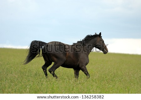 Horses on a meadow in summer day