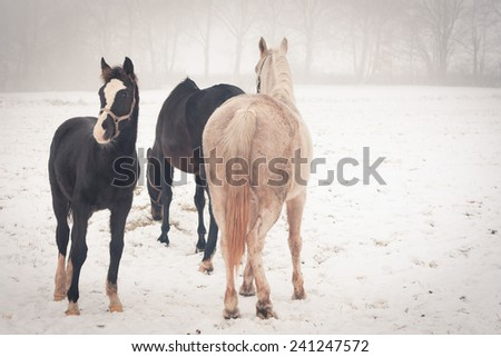 Horses on a meadow on a misty winter day - stock photo