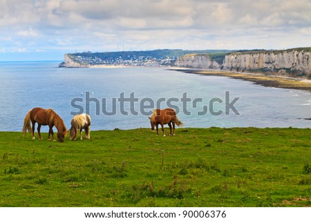 Horses4 on cliffs near Etretat and Fecamp, Normandy, France - stock photo