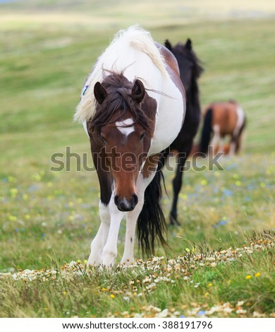 Horses on lush pasture in the spring - stock photo