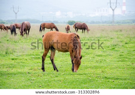 horses on the green field - stock photo