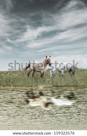 horses on the meadow near the water - stock photo