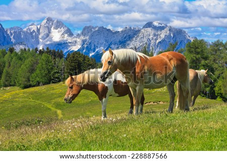 Horses on the mountain pasture in the summer with Julian Alps in the background, Slovenia - stock photo
